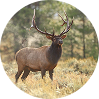 The Conservation Outdoor Recreation Education (CORE) Program is British Columbia's Hunter Education Program. If you wish to hunt in BC, you must pass the CORE exams and obtain a Fish & Wildlife I.D. This two-day program is also great for anyone interested in outdoor recreation.
